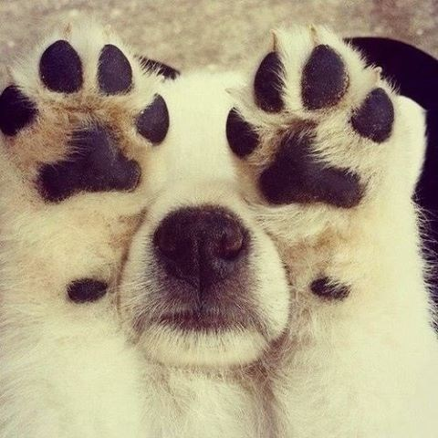 cute dogs puppies paws - 8168504576