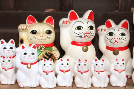 Lucky Cat cat facts Japan true facts - 8168709