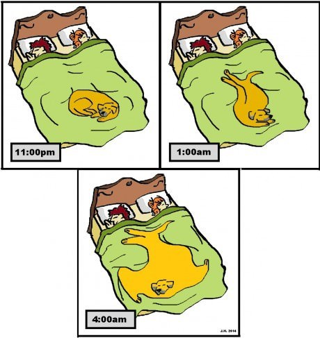 dogs beds sleeping web comics - 8169301248