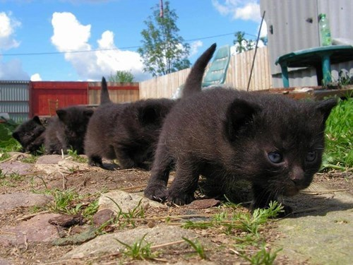 Hiking kitten so cute marching - 8169518592