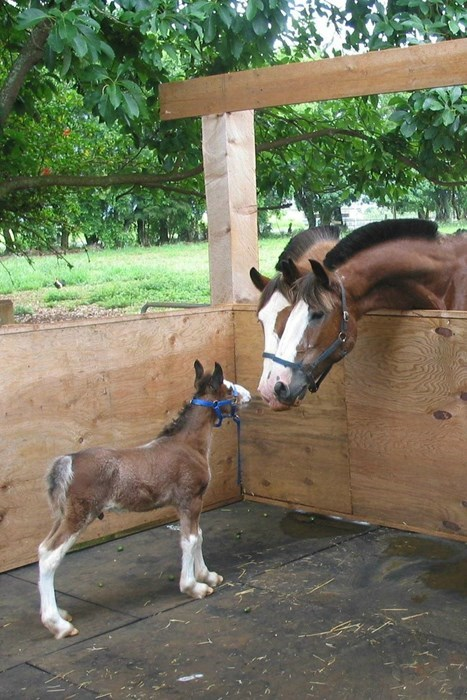 Babies cute horses parents squee - 8169521408