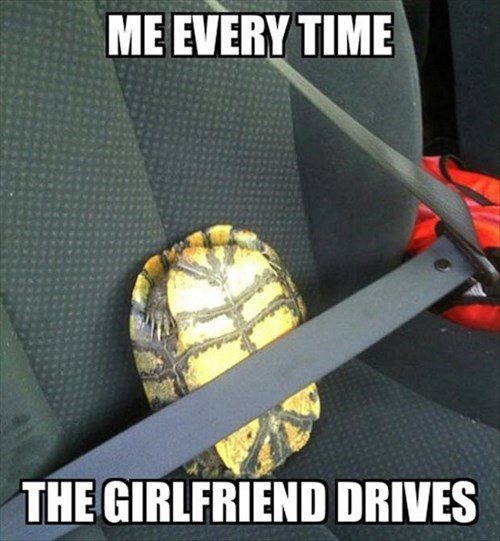 turtles,scared,driving,funny