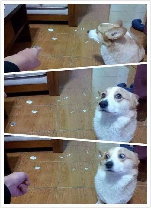 bromas perros animales fotos - 8169611520
