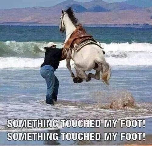 nope beach horses funny - 8169624832