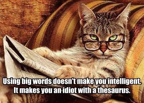 Cats funny vocabulary cute intelligent - 8169626368