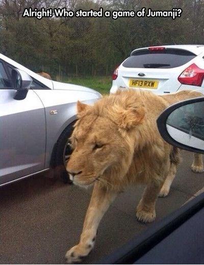 lions jumanji funny - 8169630720