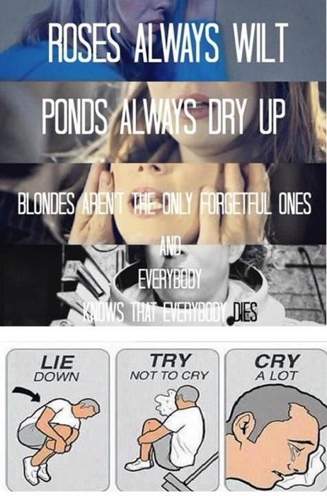 try not to cry doctor who companion - 8169640960
