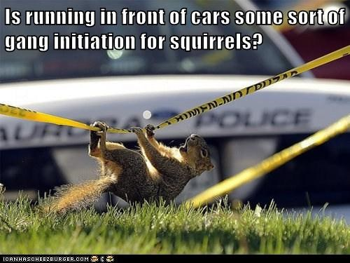 crazy puns hazing squirrels - 8169678080