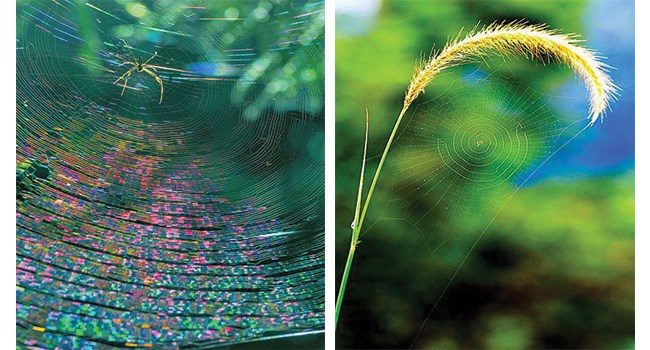 nature cool mother nature spiderwebs beautiful - 8169989