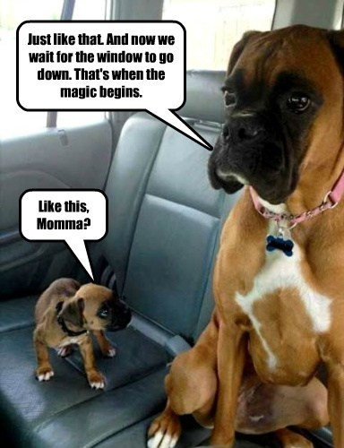 cars cute dogs car ride puppies - 8170128128