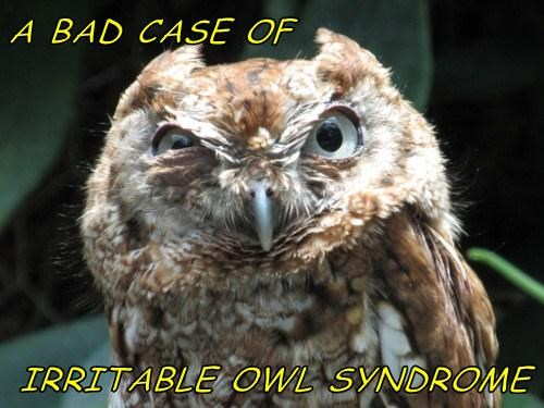 funny puns owls IBS - 8170257920