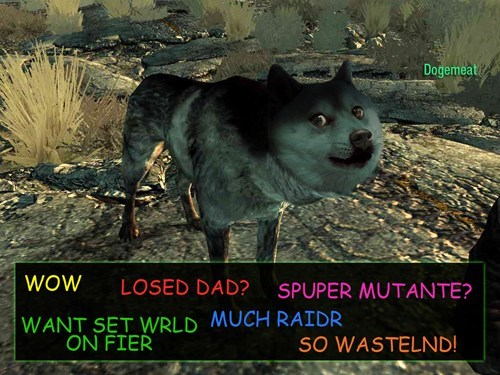 DLC,fallout,doge