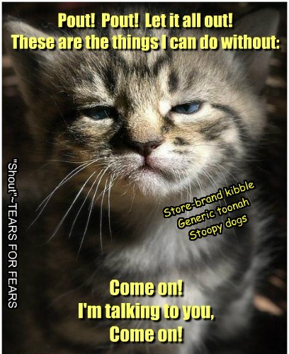 cute kitten parody tears for fears - 8170580224