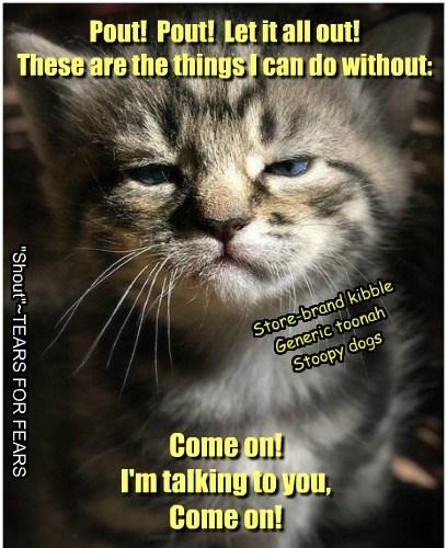 cute kitten parody - 8170580224