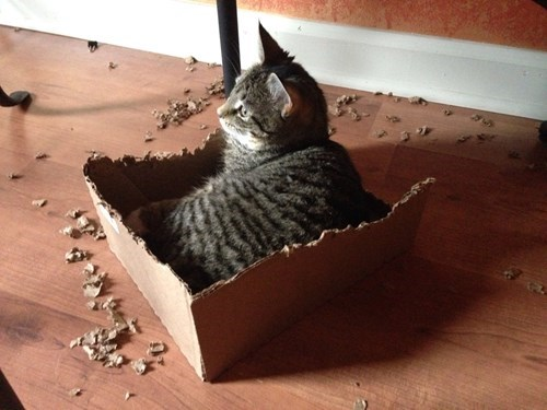 Cats cute boxes destroy - 8170698240