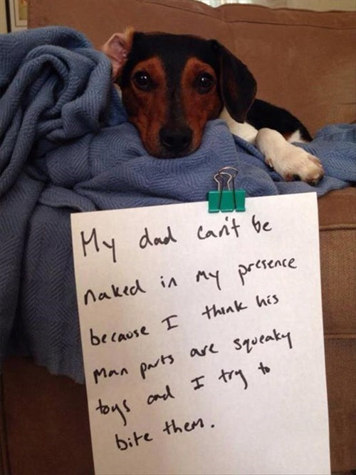 dog shaming,dogs,privates,toys