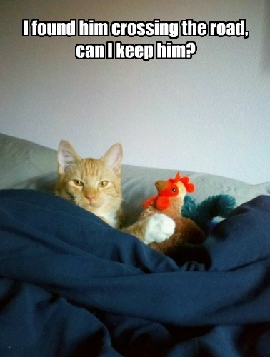 Cats snuggle funny chickens - 8171235840