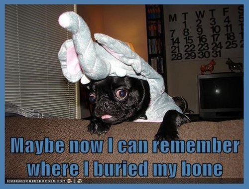 costume dogs elephants funny featured user - 8171750144