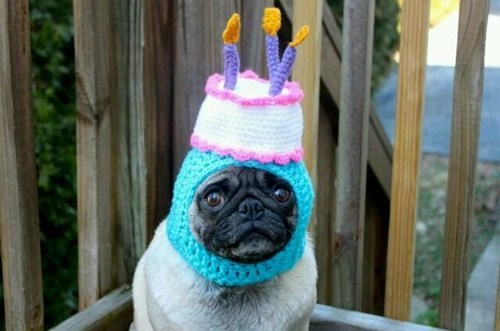 birthday dogs hat pug poorly dressed knitting g rated - 8171775744