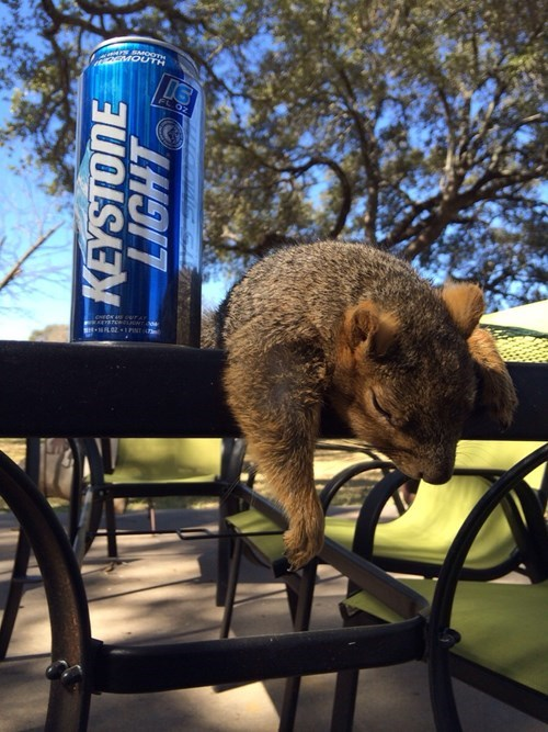 beer after 12 morning squirrel