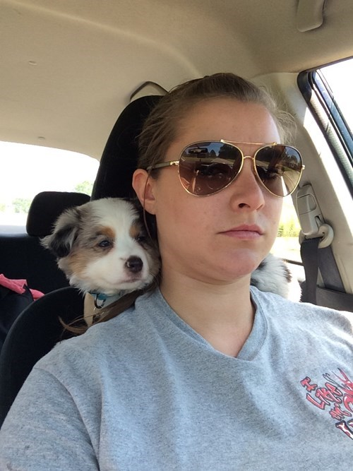 cars cute driving puppies - 8171931648