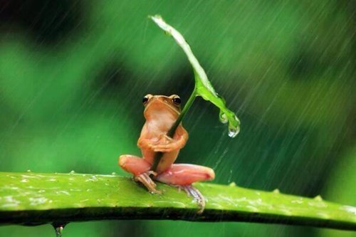 cute frogs umbrella rain