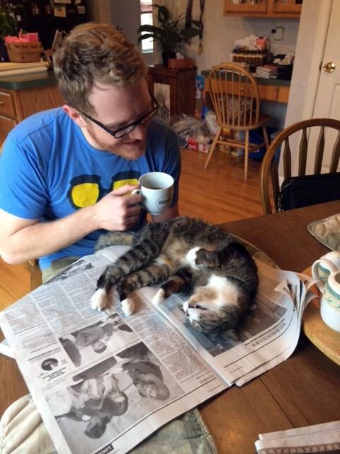 Cats lazy funny pet me reading - 8171956480