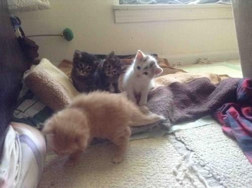 Cats cute explorer funny kitten - 8171970560