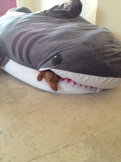 beds dogs funny sharks - 8172024064