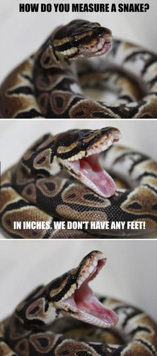 jokes puns snakes - 8172063744