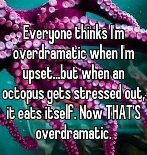 Fun Fact octopus - 8172246272