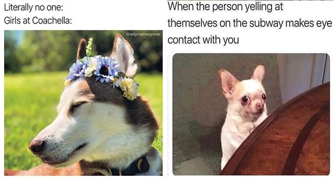 dogs dog memes funny dog memes funny memes Memes doggo doggo memes funny - 8172549