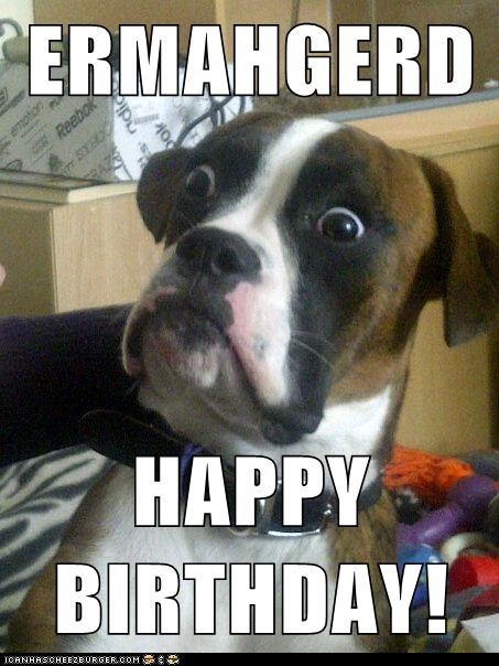 brown and white dog looking surprised happy birthday meme