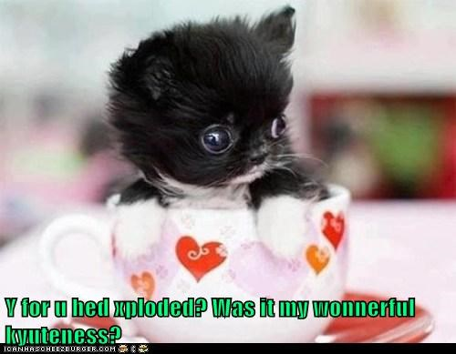 cute puppies tea cup squee - 8173073920