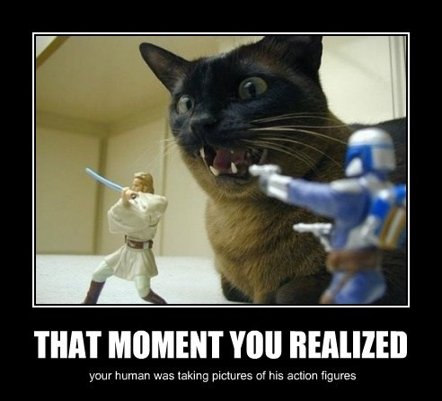 action figures,camera,shocked,Cats