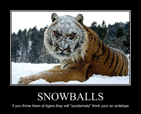 "SNOWBALLS if you throw them at tigers they will ""accidentaly"" think your an antelope"