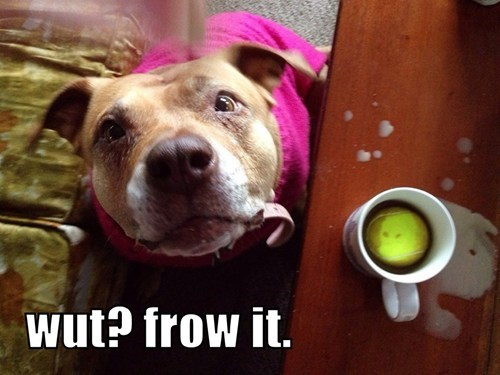 cute coffee fetch innocent puppies - 8173267200