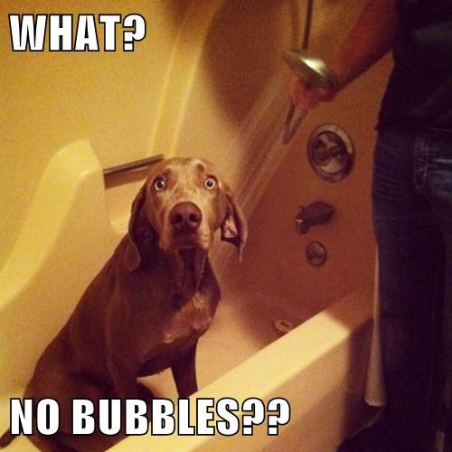 WHAT? NO BUBBLES??