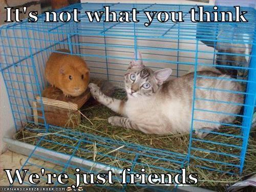 Cats guinea pigs innocent - 8173649408