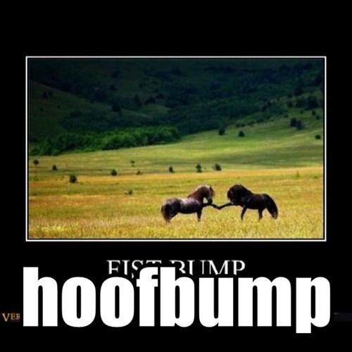 IRL,hoofbump,horses