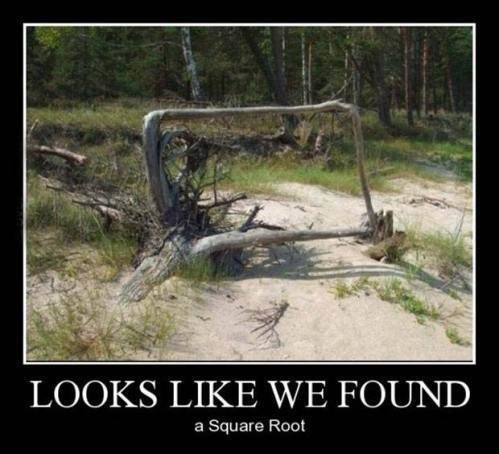 IRL,nature,square root