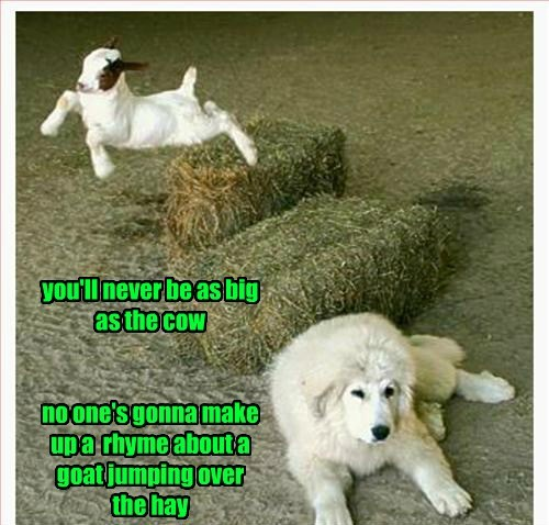 dogs funny puns goats nursery rhymes - 8174099968