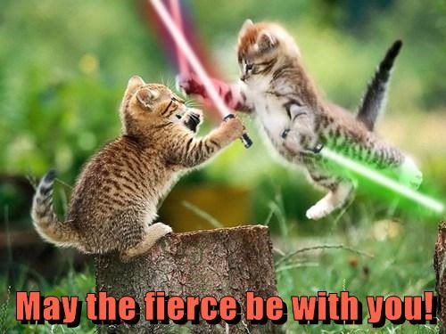 funny,kitten,star wars
