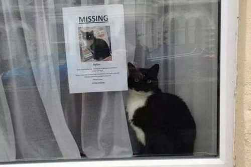 Cats,clueless,funny,mystery,missing