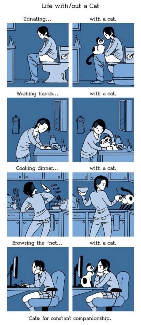 Cats comparisons web comics - 8174791168