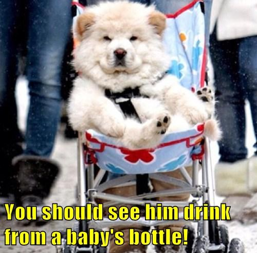 Babies dogs stroller strapped in - 8175070976