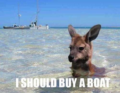 boats puns kangaroos swimming i should buy a boat - 8175130112
