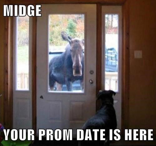 prom moose funny - 8175185408