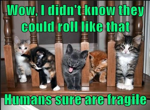 kitten accident Cats funny fall - 8175372288