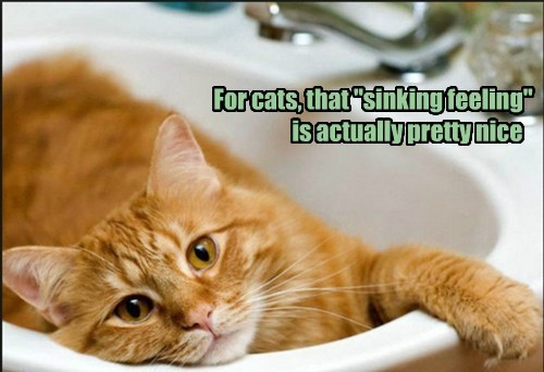 Cats,fun,puns,sink